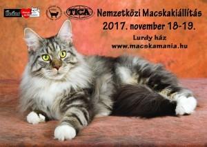 macska fedor 201711